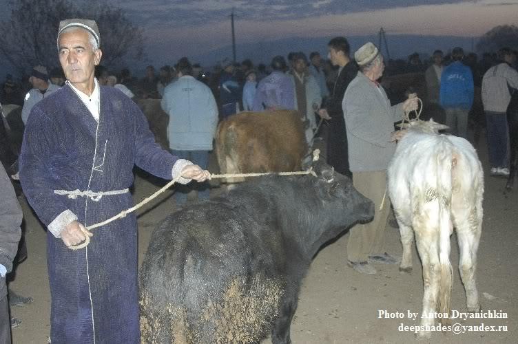 Продал единственную корову. Мигранты идут на все, лишь бы уехать из Таджикистана